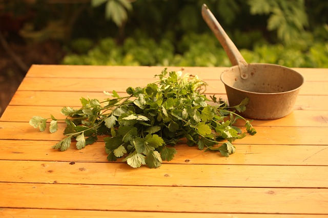 mysteries of daily life cilantro
