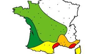 Cyprès2010