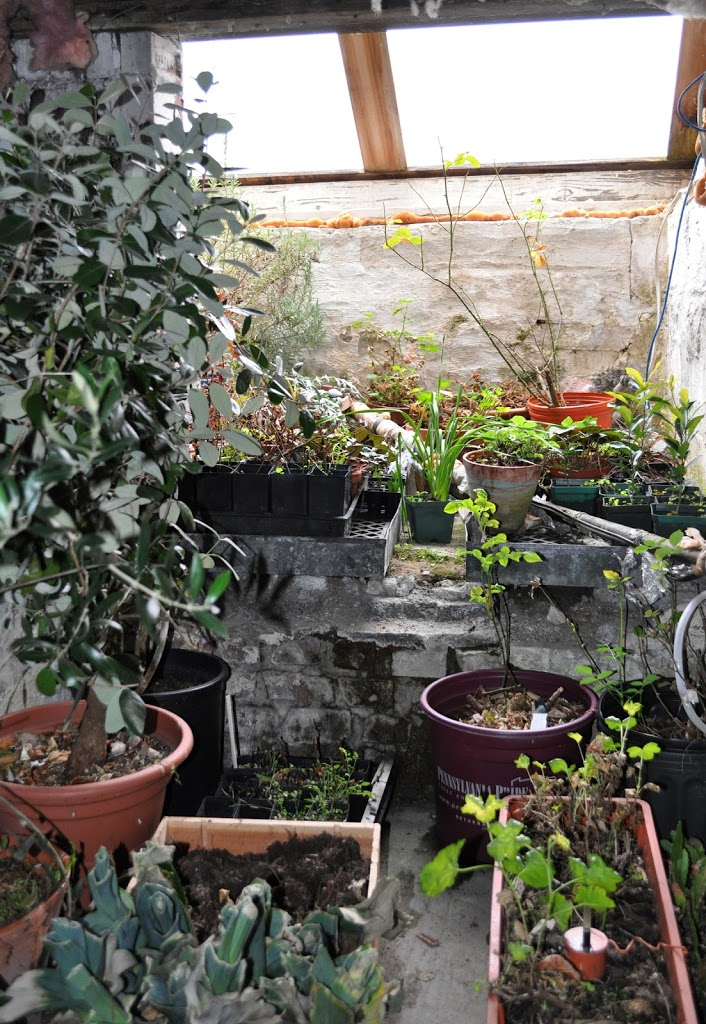 the mediterranean some of the plants in my basement feel spring in the