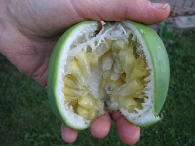 Maypop fruit