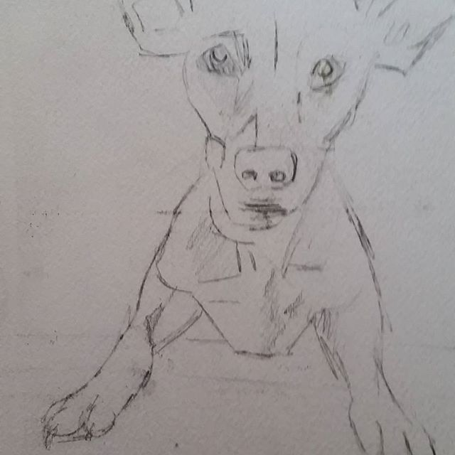 Pencil sketch of Paca the dog