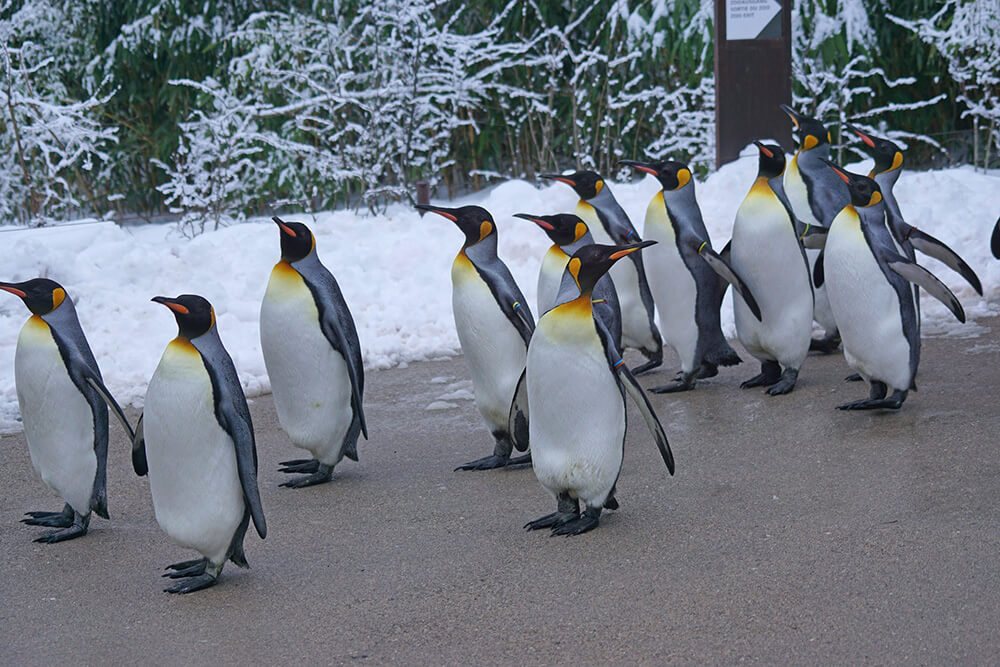 Major Changes for Google's Penguin Algorithm
