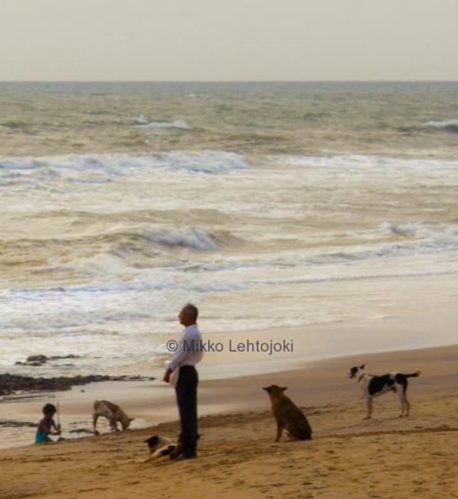 mies ja koirat rannalla