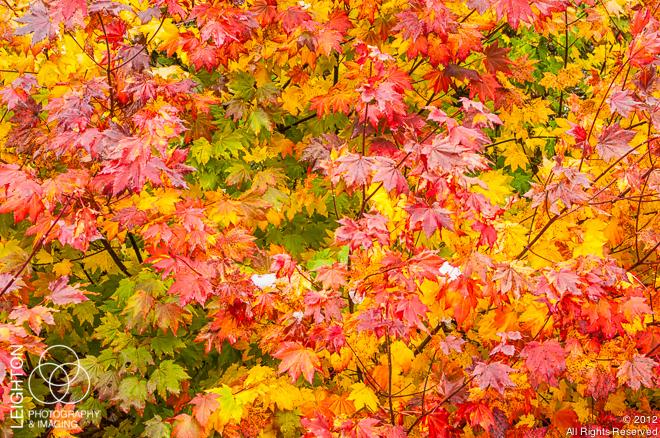 Autumn Colors in Snoqualmie Pass