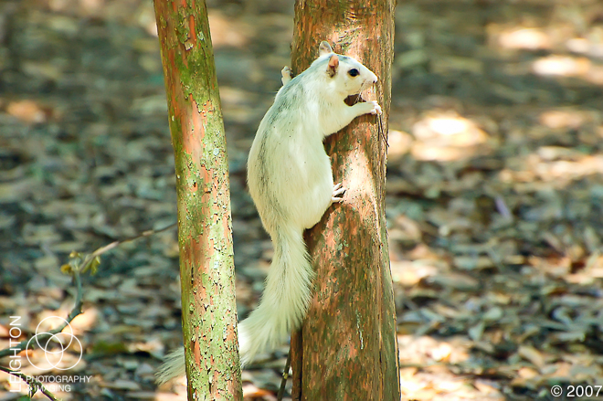 WhiteFoxSquirrel101