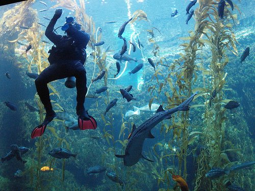 So what qualifications do you need to apply for a Aquarium Diving Job?