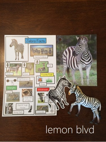 Animal Trackers Zebras - lemon blvd