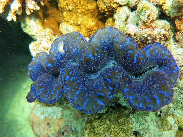 La technologie photovoltaïque bientôt améliorée grâce à des mollusques ?