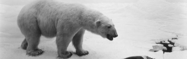 cropped-01.-Polar-Bear.jpg
