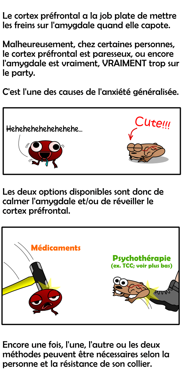 Rôle de l'amygdale et du cortex préfrontal (cerveau) dans l'anxiété