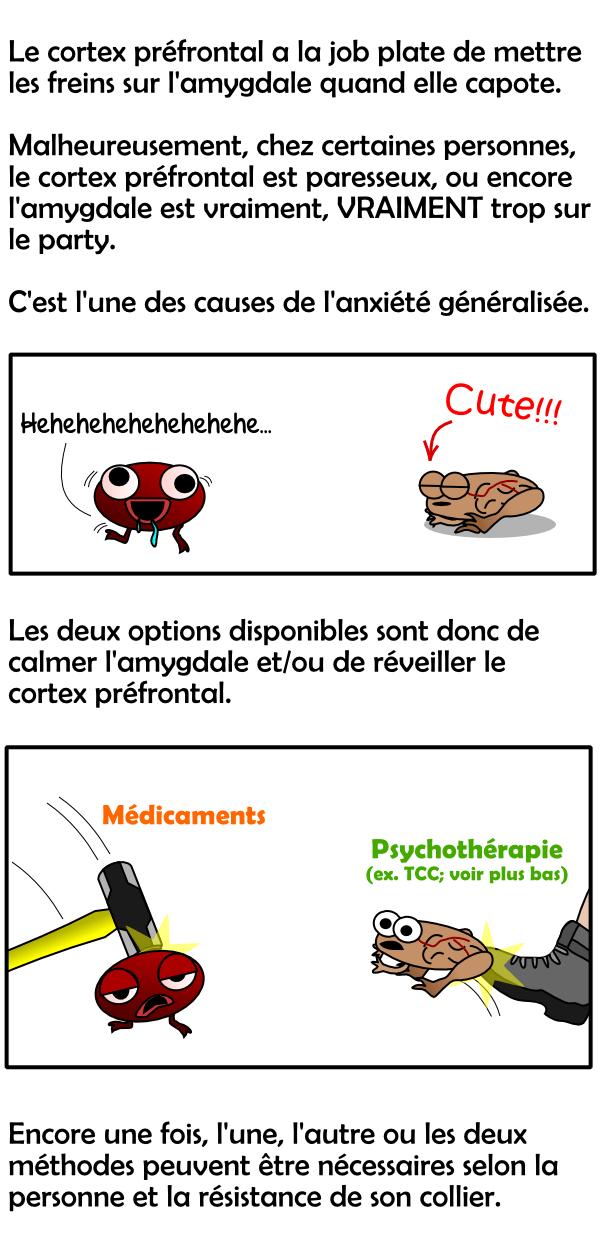 Rôle de l'amygdale et du cortex préfrontal (cerveau) dans l'anxiété