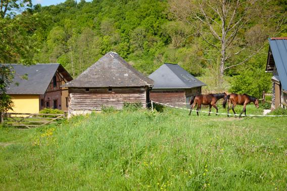 animaux gîte cabane du pêcheur moyaux calvados normandie