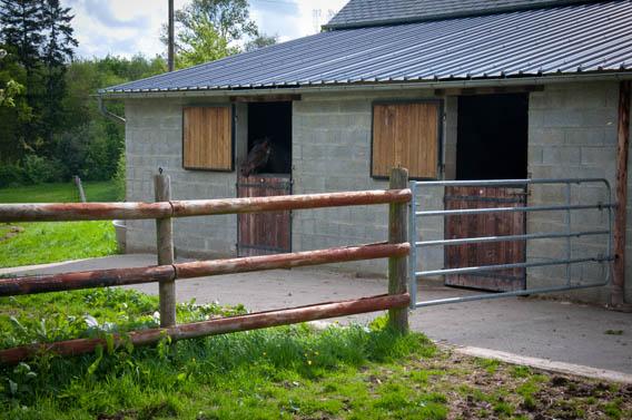 cheval ferme les bruyères carré moyaux calvados normandie
