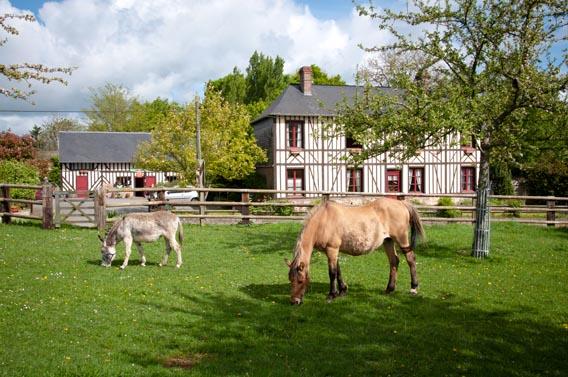 âne cheval ferme les bruyères carré moyaux calvados normandie