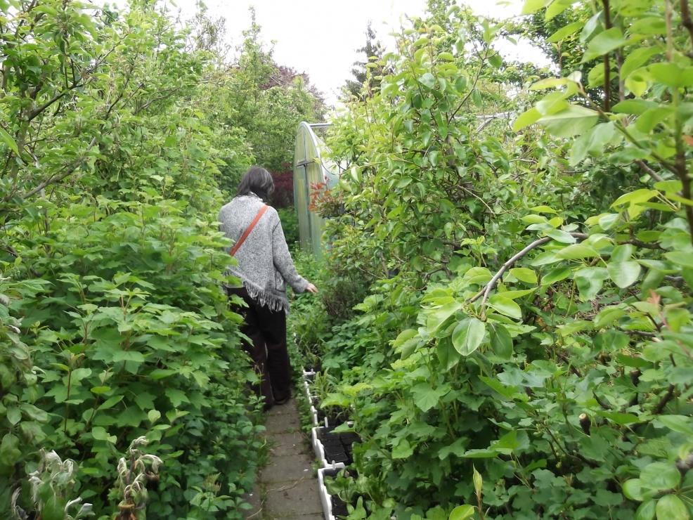 Jardin for t le sauvage for Jardin foret