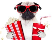 chien_cinema225