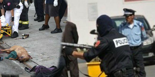 Casablanca: La police tire à balles réelles… sur un chien