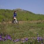Activités sportives et nature dans les monts de Lacaune pendant vos vacances à Les Rives du Lac du Laouzas, Tarn (Midi-Pyrénées)