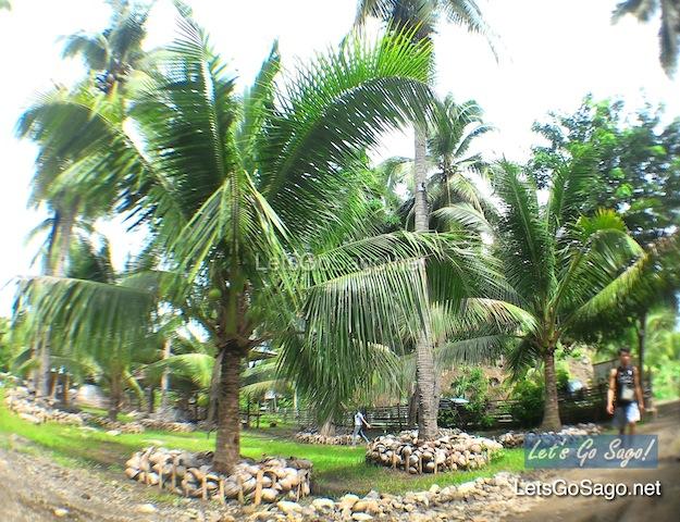 Buhian Farm