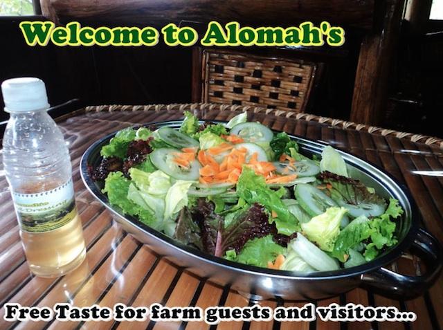 Alomah's Garden Salad