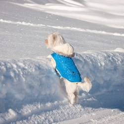 Preparing Your Dog For Winter Weather