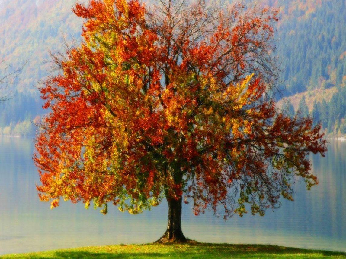 Test Psicológico de Personalidad: el Árbol