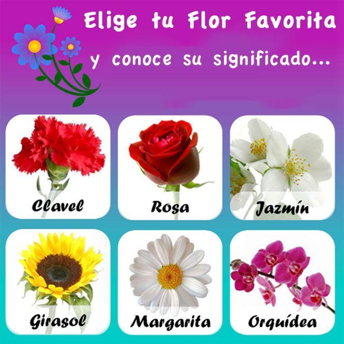 De todo un poco - Clases de flores y sus nombres ...