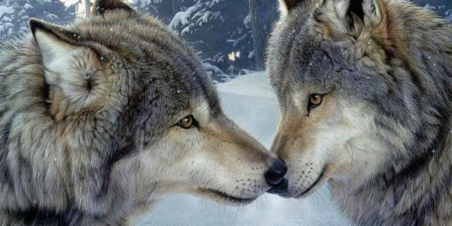 [Critique DVD] «Loup»