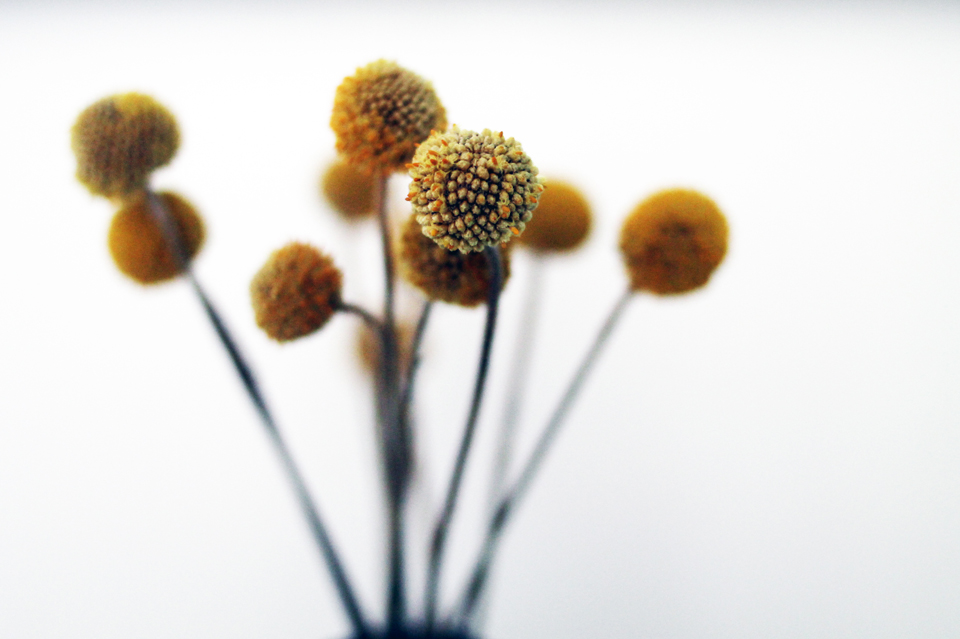 960px_Lieblingsblumen Trommelstöckchen