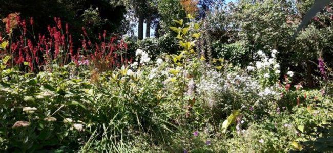tuin,renovatie,zomer,augustus,2016,oud plekje,opnieuw gevonden,Friesland