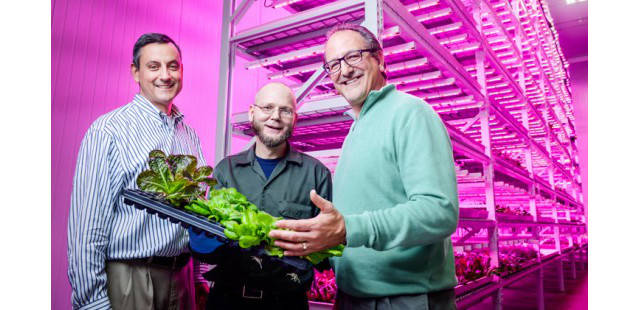 biggest-indoor-farm-produces-10000-heads-lettuce-indianapolis