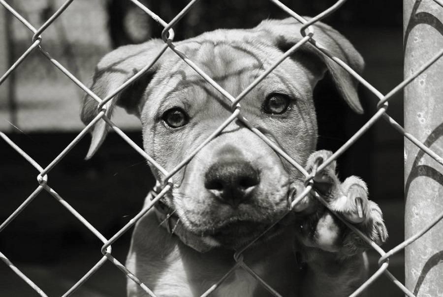 Reasons-Adopting-a-Pet