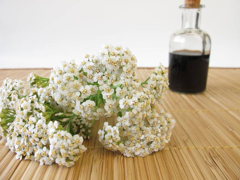 How to Make a Yarrow Insect Repellant