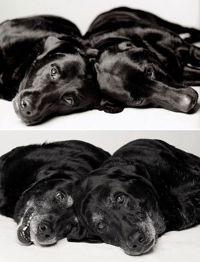 dogs-getting-older_12