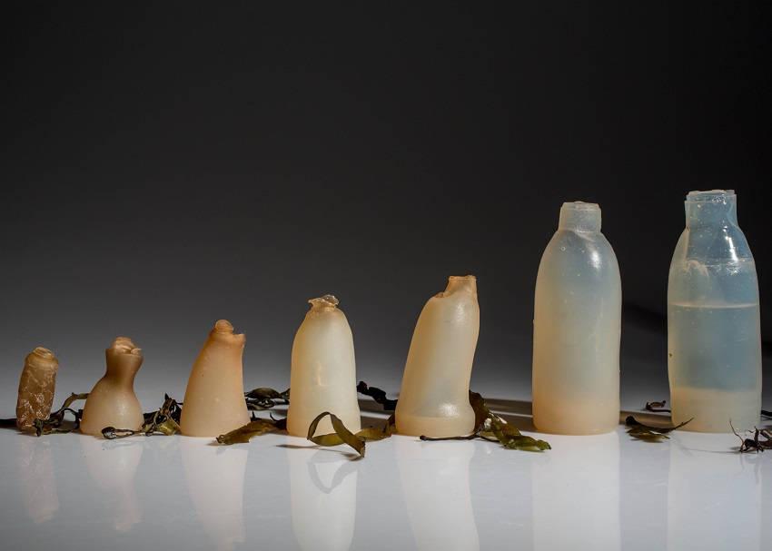 Degradable Algae Water Bottle
