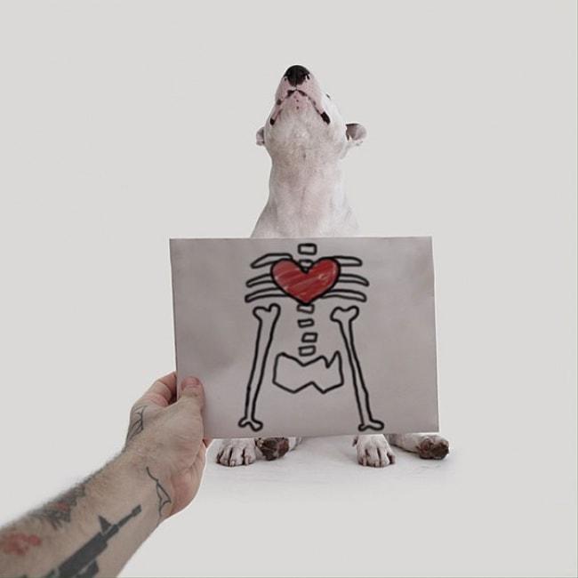 Jimmy Bull Terrier 18