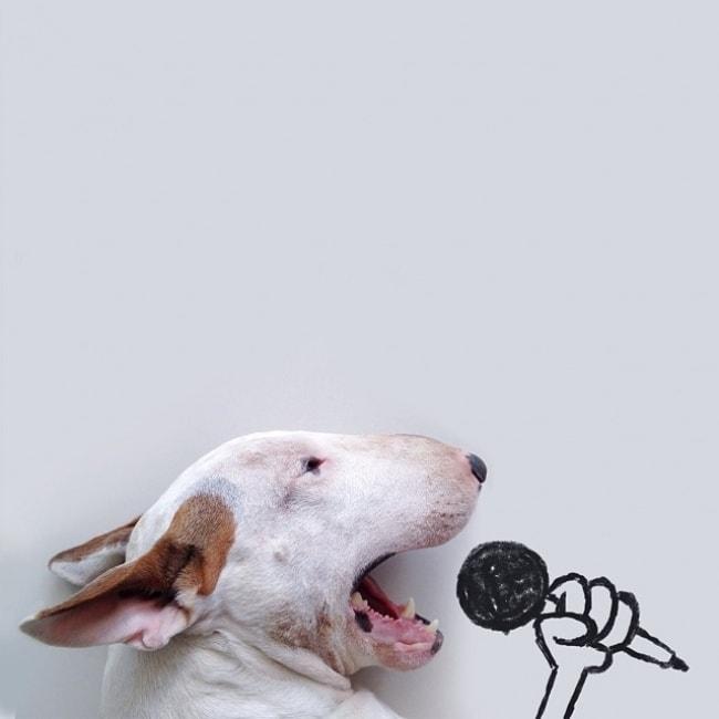 Jimmy Bull Terrier 6