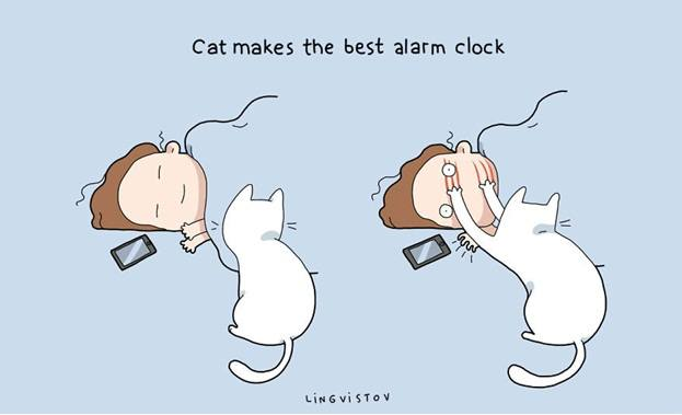owning-a-cat-funny-illustrations-14