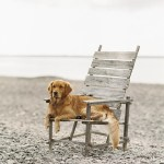 Dogs And Hot Weather - 17 Tips For Keeping It Cool This Summer - dog on beach