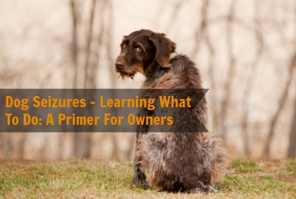 When Your Dog Has A Seizure: A Primer For Owners