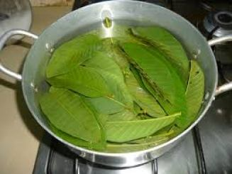 guava decoction