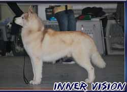 husky from inner vision kennel