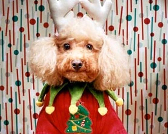 12.17.15 - Dog Ugly Christmas Sweater12
