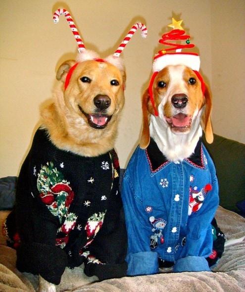 12.17.15 - Dog Ugly Christmas Sweater17