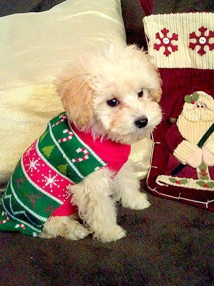 12.17.15 - Dog Ugly Christmas Sweater3