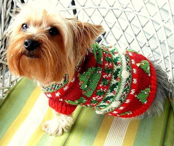 12.17.15 - Dog Ugly Christmas Sweater7