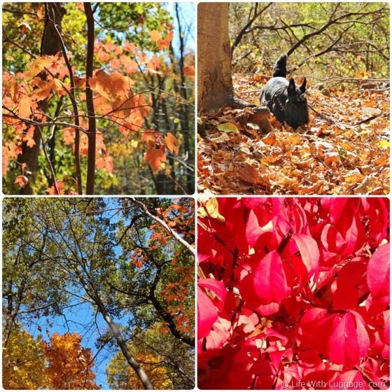 fall-leaves-collage.jpg