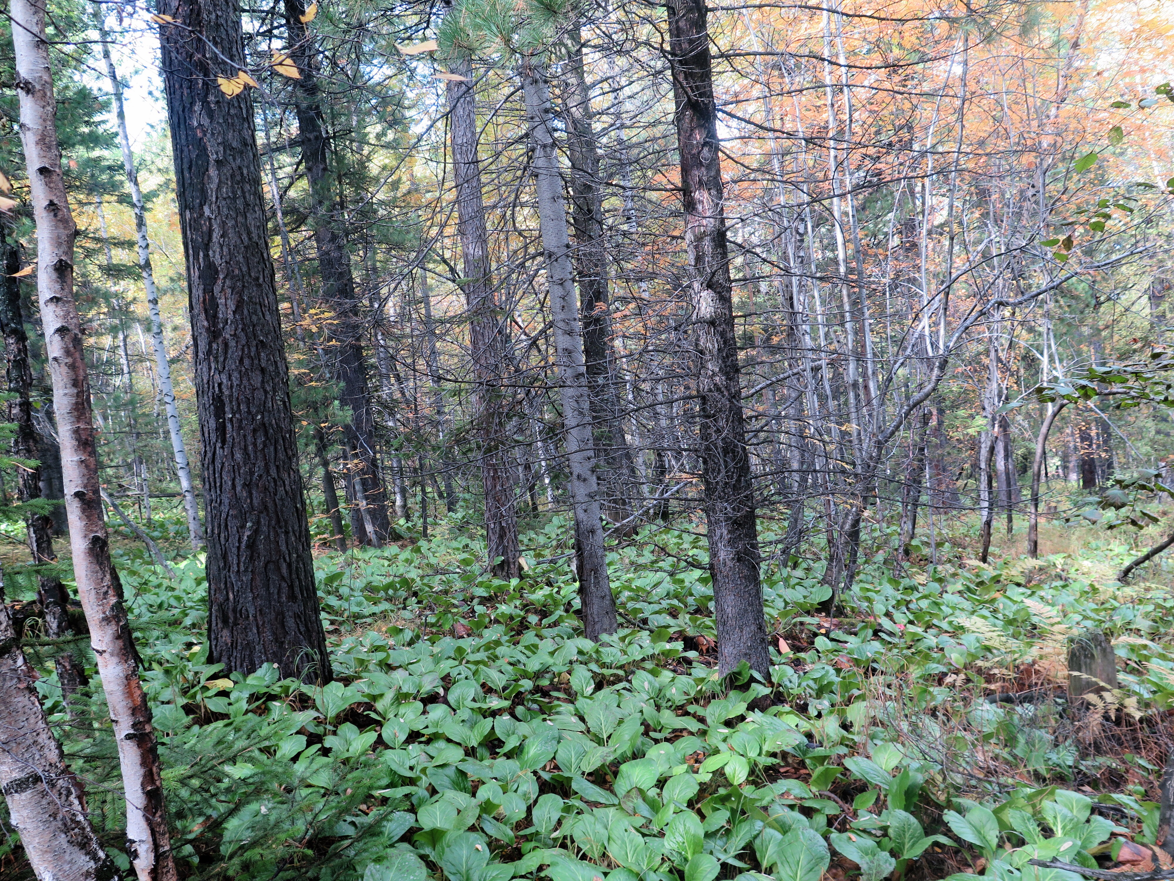 There were many different types of plants, grouped in ways that made me feel like the trail changed more than it did.