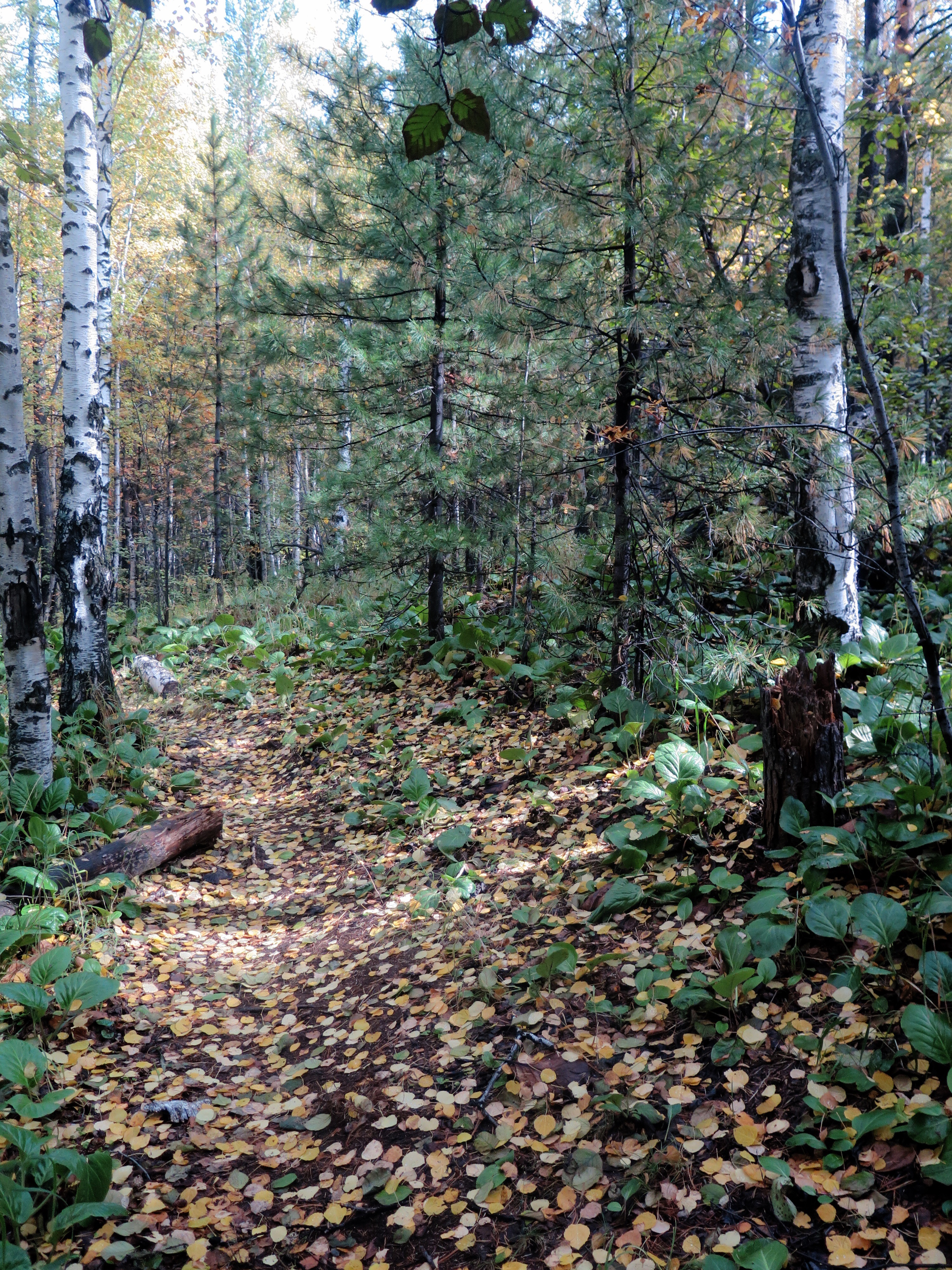 """This path made me start quoting Robert Frost. """"Two roads diverged in a yellow wood...."""""""