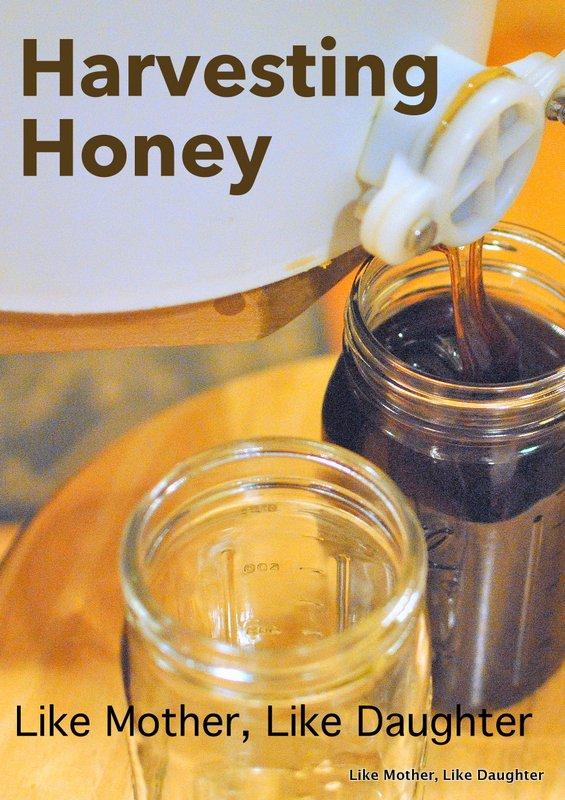 honey harvest-005